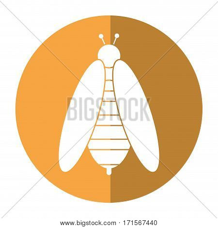 bee honey insect insect shadow vector illustration eps 10