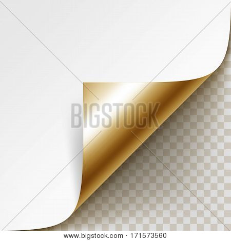 Vector Curled Golden Corner of White Paper with Shadow Mock up Close up Isolated on Transparent Background