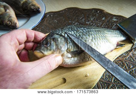 Gutting of freshly caught fish carp washing sink cleaning scales.