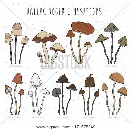Collection isolated elements vector hand drawn illustration. psilocybe sphinctrinus, aztecorum, yungensis, hoogshagenii, mexicana, zapotecorum siliginoides
