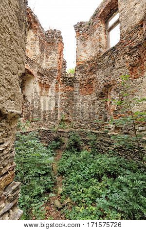 Scrubby interior of the large house ruins