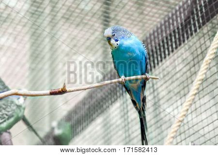 image animal small budgie sleeping on a branch