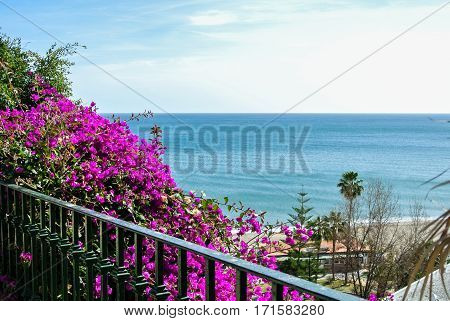 A view to Mediterranean sea and beach with palms from observation desk covered with pink branches of flowering bougainvillea at Plaza de Cantabria in Torremolinos, Spain.