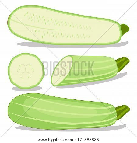 Vector illustration logo for whole ripe vegetable squash zucchini with green stem