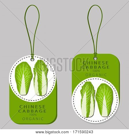 Vector illustration logo for whole ripe vegetable chinese cabbage with green rolls leaf