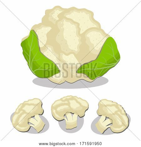 Vector illustration logo for whole ripe vegetable cabbage cauliflower with green leaf.