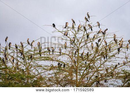 Many Birds On The Tree In Kenya