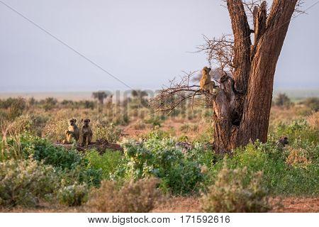 Cute Monkey On The Tree