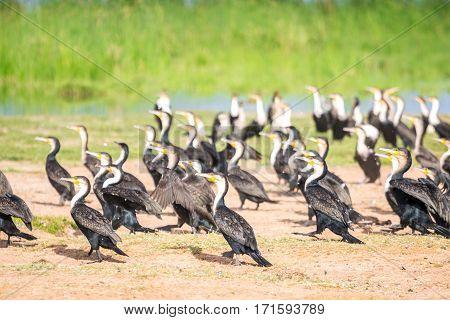 Birds By Jipe Lake, Kenya
