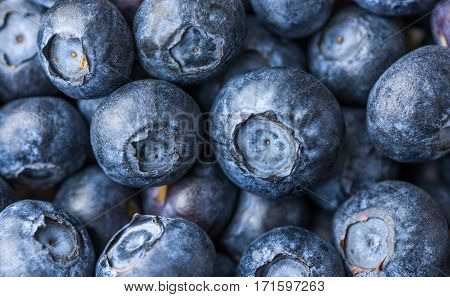 Many Fresh Blueberries Background. Close Up. Texture
