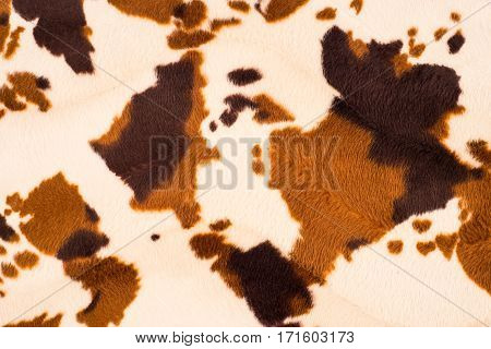 Cow skin texture. Abstract background empty template.