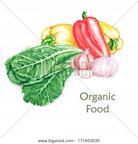 Hand-drawn watercolor food illustration of organic products: fresh vegetables harvest isolated on the white background