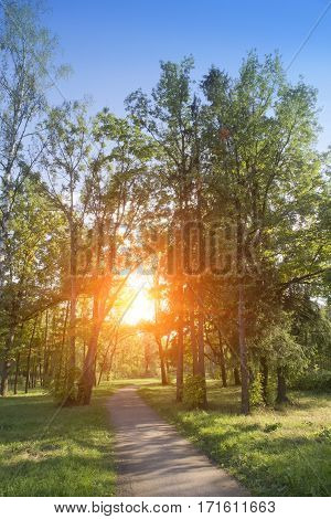 footpath in the summer garden. Suburb of St. Petersburg Russia.
