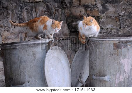 Two stray cats sit on the garbage container