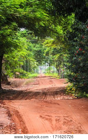 Landscape Of Dirt Road On Farm Surrounded By Trees