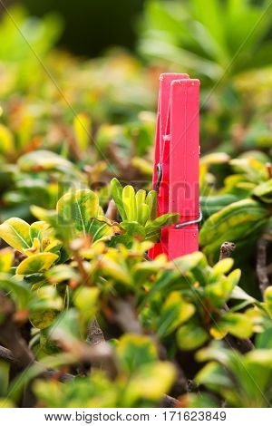 Red plastic clothespin hanging on green bush