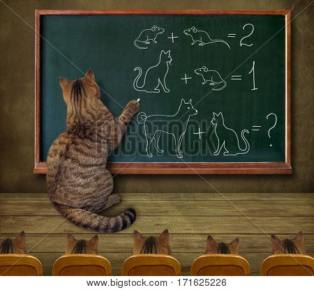 The cat teacher is standing against a chalkboard. He teaches his pupils mathematics.