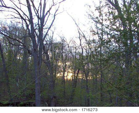 Forest Sun Glow