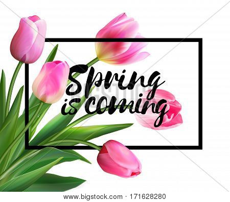 Spring is coming tulips flowers background with lettering. Template for greeting card with blooming tulip flowers. Vector illustration EPS10. Pink tulips on white backdrop.