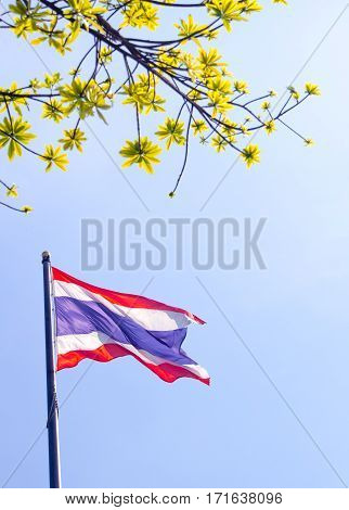 Thailand flag atop the flagpole and fresh leaves foreground and blue sky background