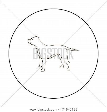 Pitbull vector illustration icon in outline design