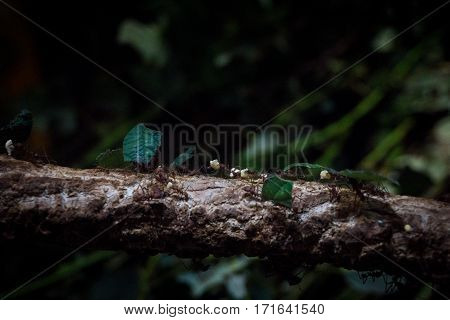 Close-up of working ants on a branch