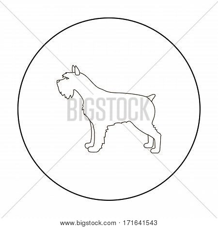 Schnauzer vector illustration icon in outline design