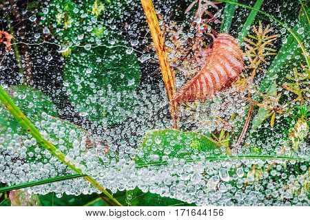Morning water droplets on spider web with brown leaf.