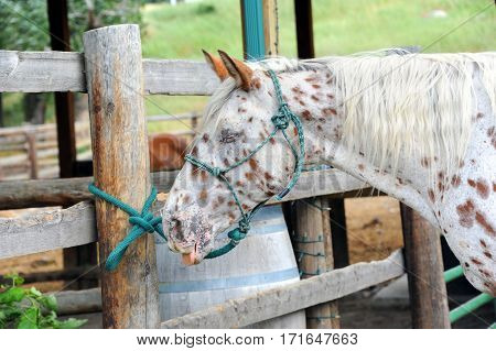 Homely Horse