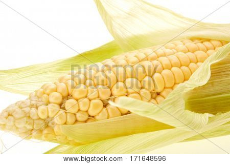 Ripe ear of corn on a white background.  Fresh corn cob.