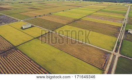Aerial photo from flying drone of a beauty nature scenery with farm with cultivation of grain rice or millet crops. Sowing paddy fields with green plants in Thailand countryside