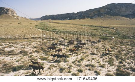 Aerial photo from flying drone of a thoroughbred horse are grazing in Kazakhstan district in arid wilderness landscape. Meadow with animals in countryside with dry climate. Concept of environment