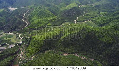Aerial photo from flying drone of a wonderful nature landscape with coffee or tea plantation in Asian rural in summer day. Green field with growing vegetarian food in Cameron Highlands district