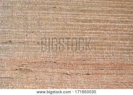 Fine texture of old and natural acacia wood.
