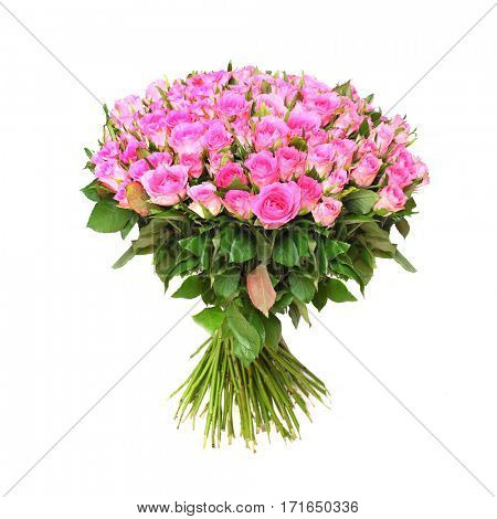 Hundred pink roses. Bunch of flowers on white background. Great gift for your love.