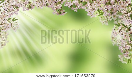 Spring has come to the cherry orchard. branches of cherry blossoms. Beautiful pink flowers on blurred natural background. panorama.