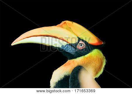 Toucan bird. Big bird with a huge beak, beautiful colors. Isolated