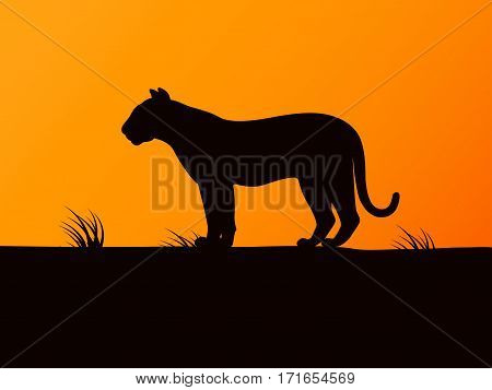 Vector illustration of black silhouette of tiger stands right on the sunset background. Side view, profile. Single tiger looking into the distance.