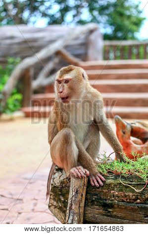 Monkey in the city. Sitting monkey. Very thoughtful