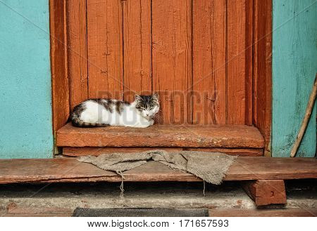 Cute Cat Lie On The Porch Of Country House. Countryside Scene. Village Life