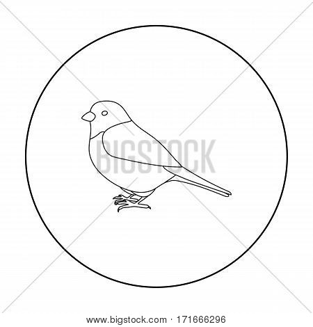 Bullfinch icon in outline style isolated on white background. Bird symbol vector illustration.