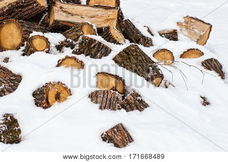A pile of pine logs in winter snow with forest background. Selective focus.