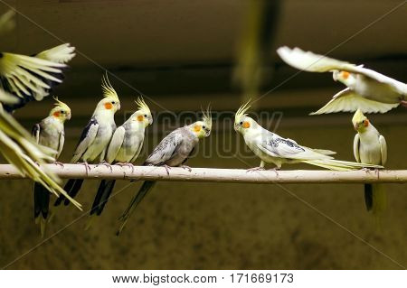 Parrots sitting on a perch in a large cage in the background of many of the same birds.