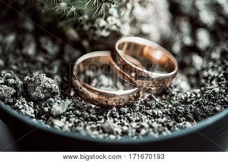 Macro Of Wedding Rings Next To The Cactus Plant