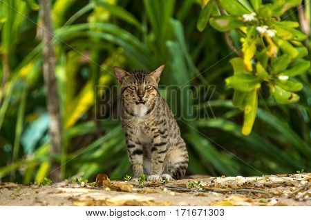 Grey Big Cat Sitting And Looking In Open Air In Green Background   Animal Close Up