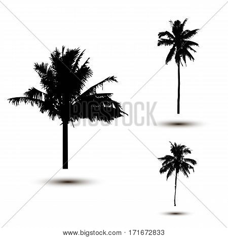 Realistic SilhouetteTropical Coconut Palm Tree, black silhouettes and outline contours on white background Vector