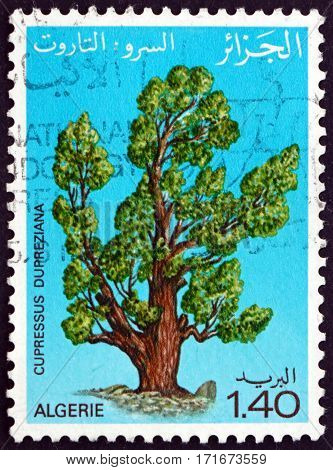 ALGERIA - CIRCA 1981: a stamp printed in Algeria shows Saharan cypress tree cupressus dupreziana is a very rare coniferous tree circa 1981