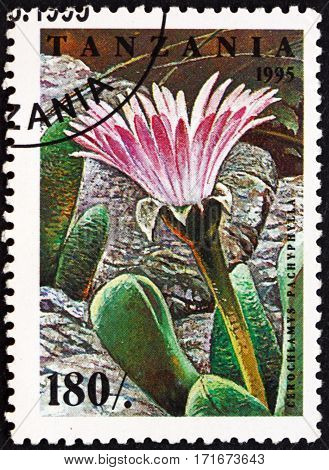 TANZANIA - CIRCA 1995: a stamp printed in Tanzania shows Cerochlamys pachyphylla flowering plant circa 1995