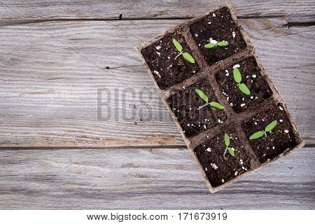 gardening square organic planting pots with tomato plant sprout on wooden table closeup