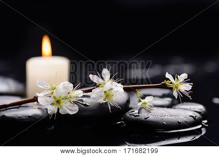 Still life with Cherry blossom, with candle on therapy stones
